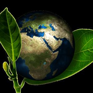 10 tips om een beetje groener te leven mamameteenblog.nl