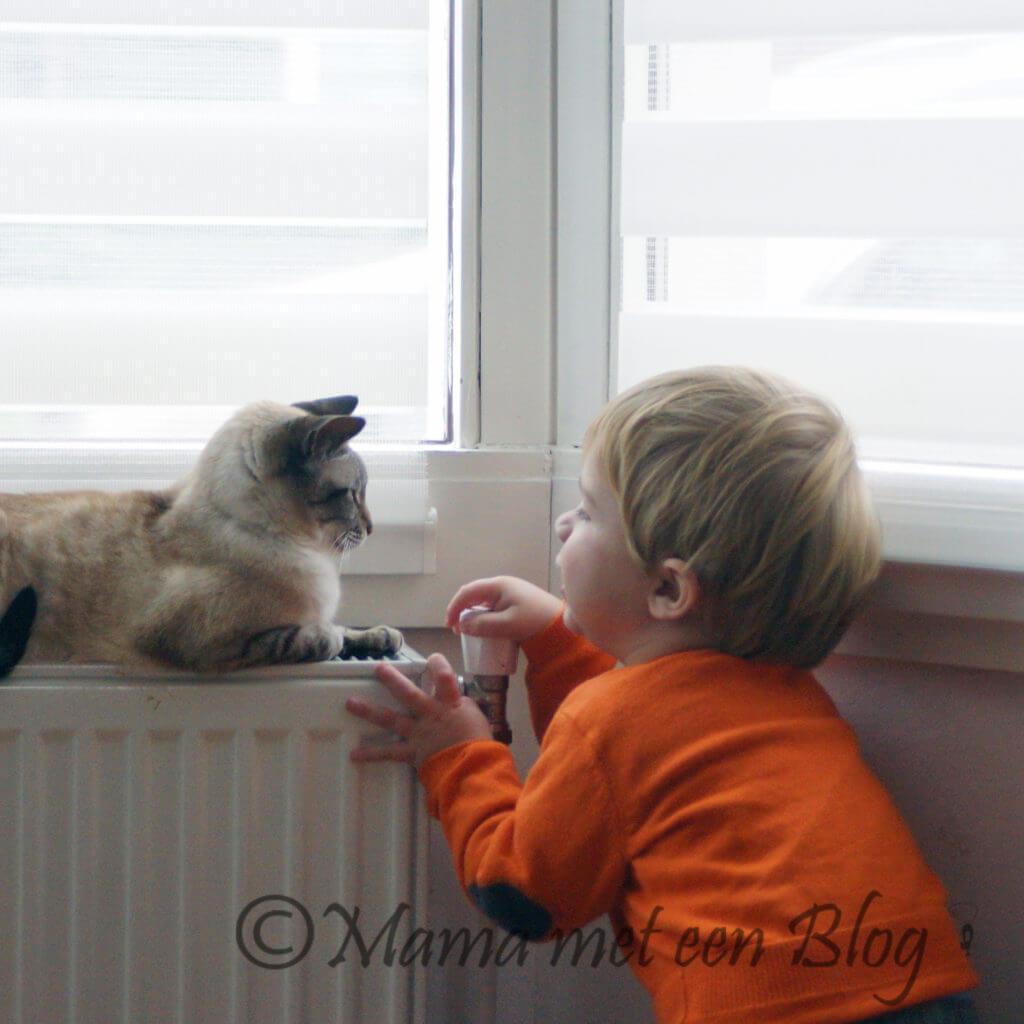 De kat is stuk Mamameteenblog.nl