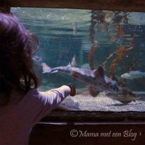sealife mamameteenblog3