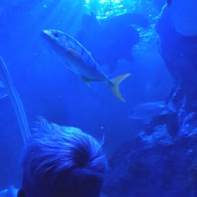 Uitgaanstips Sea life mamameteenblog.nl