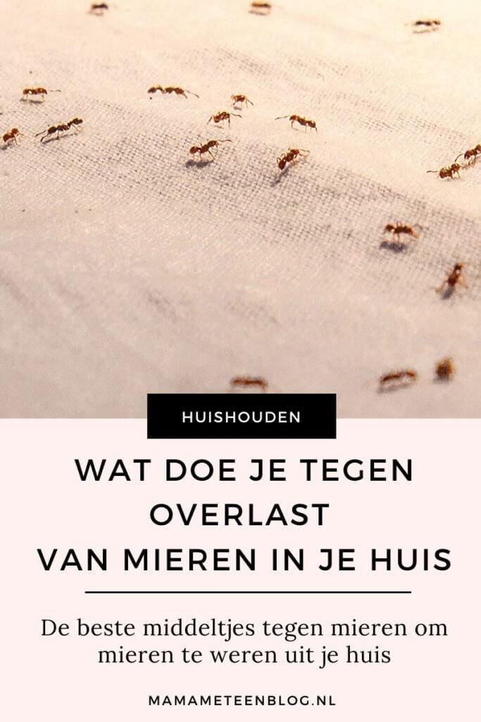 overlast mieren in je huis mamameteenblog.nl