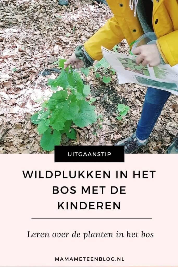 wildplukken met de kinderen mamameteenblog.nl