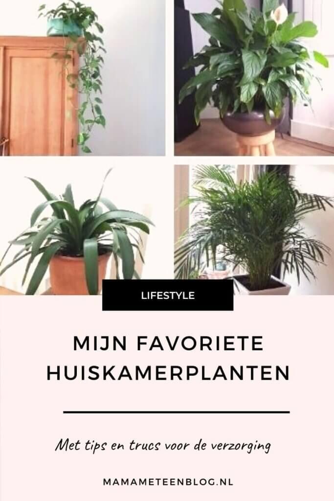 mijn favoriete huiskamerplanten mamameteenblog.nl