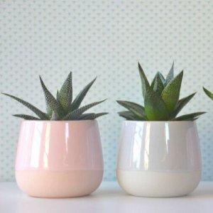 planten in de kinderkamer mamameteenblog.nl (1)